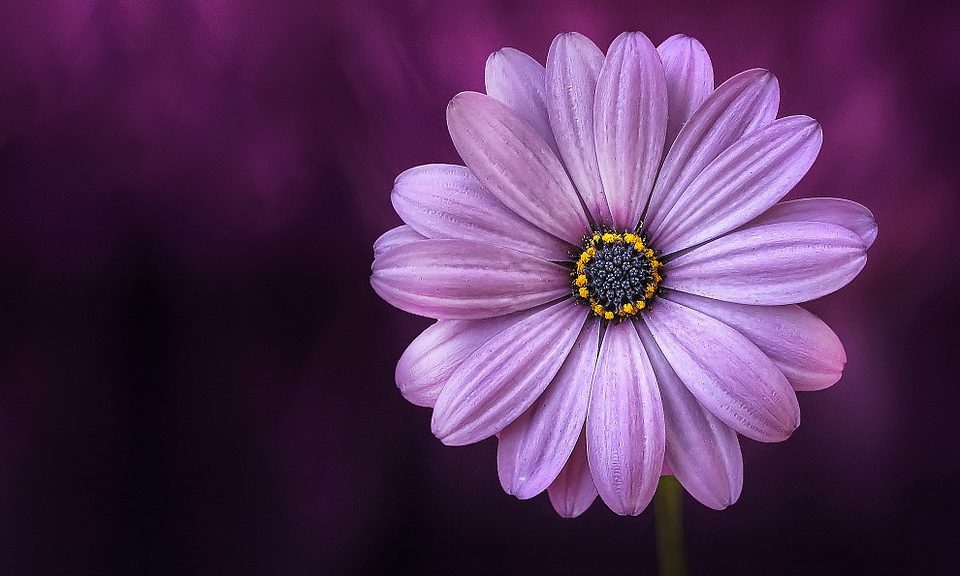 Flores de agradecimiento