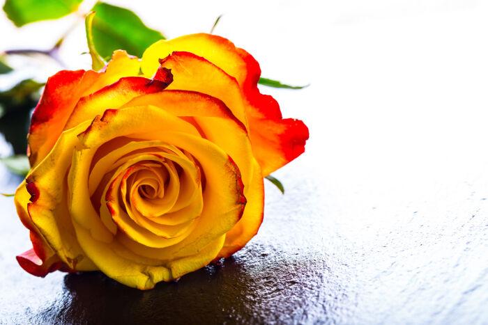 Las 10 flores más bonitas que significan amor eterno y amistad