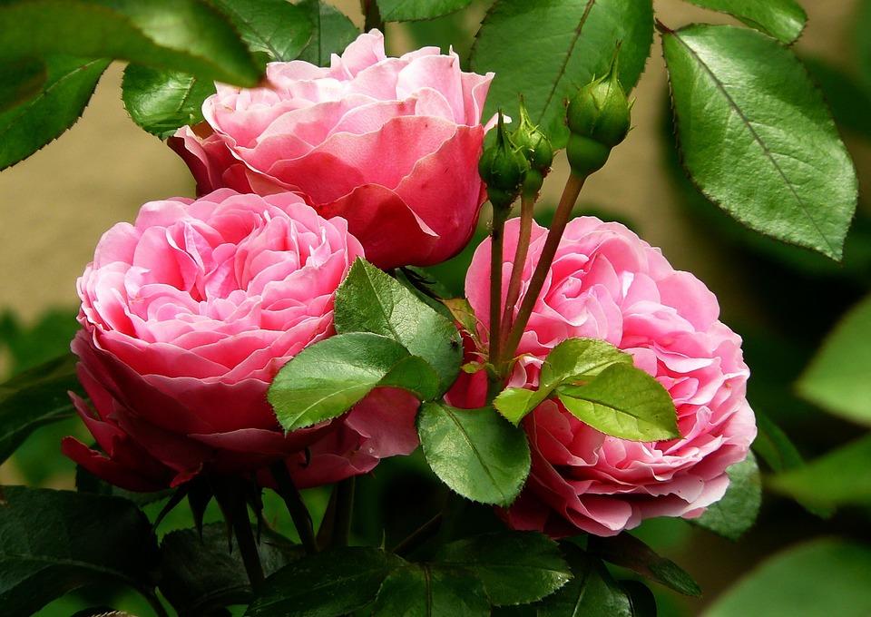 Las 100 mejores fotos e imagenes de flores de amor y de la naturaleza