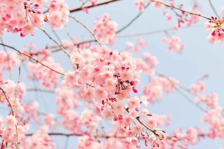 Significado de la flor de la esperanza