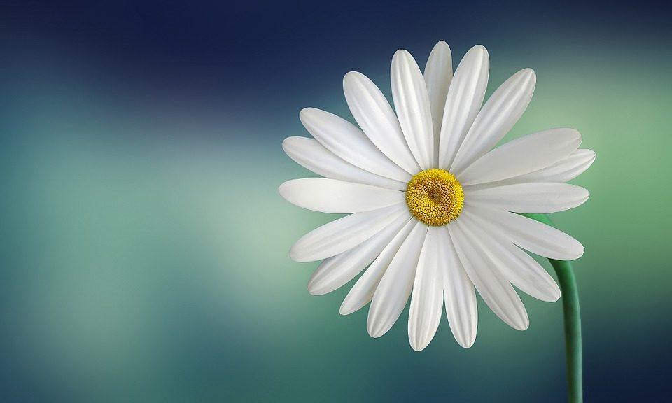 Significado de la flor de la familia