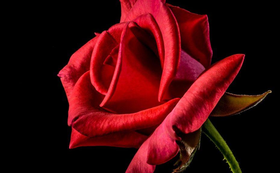 Significado de la flor de la pasion