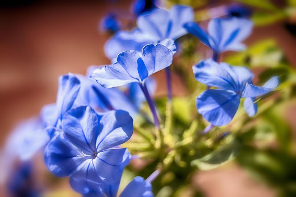 Significado de la flor del jazmin