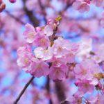 Significado de las flores japonesas
