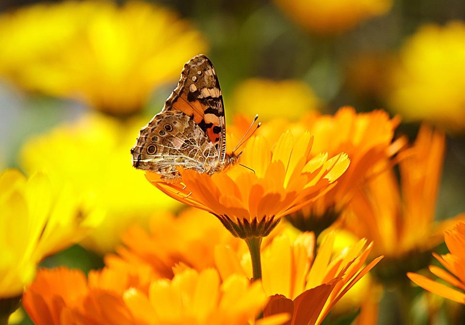 Significado de las flores amarillas
