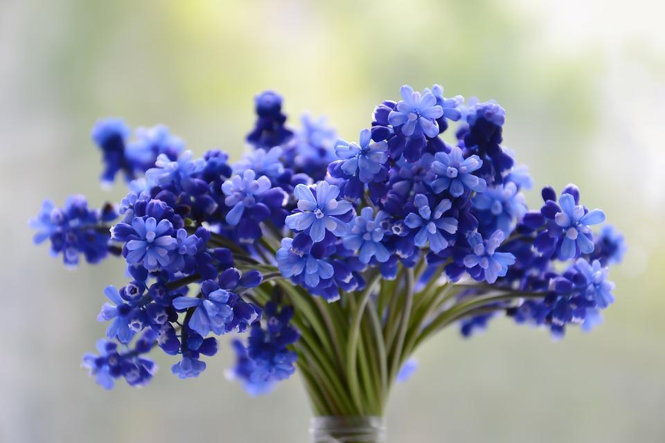 Significado de las flores azules