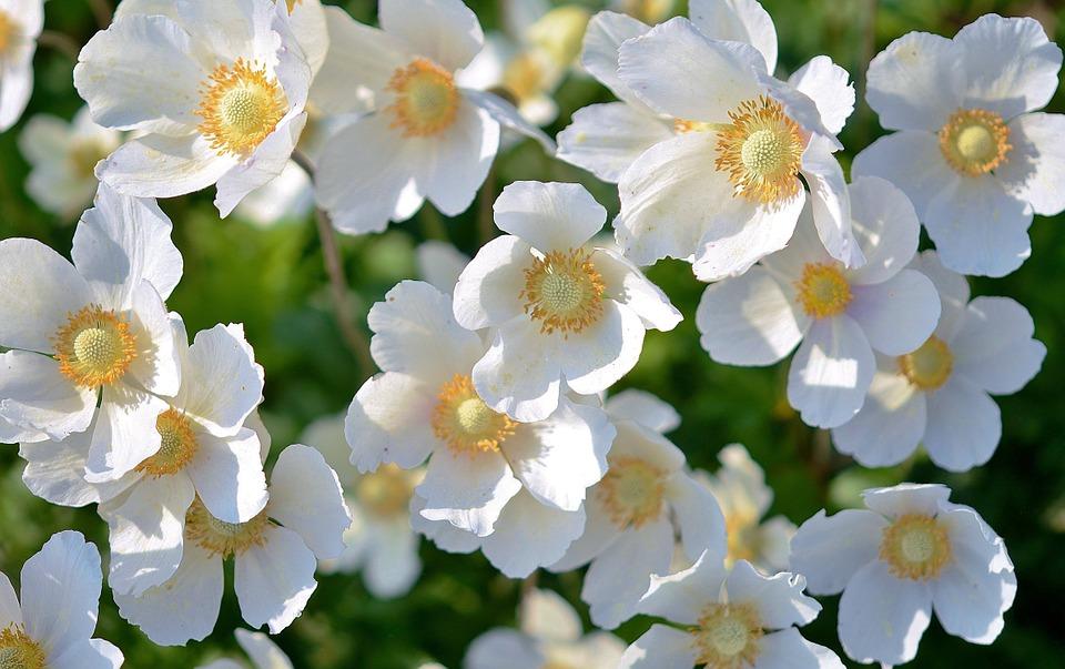 Significado de las flores blancas