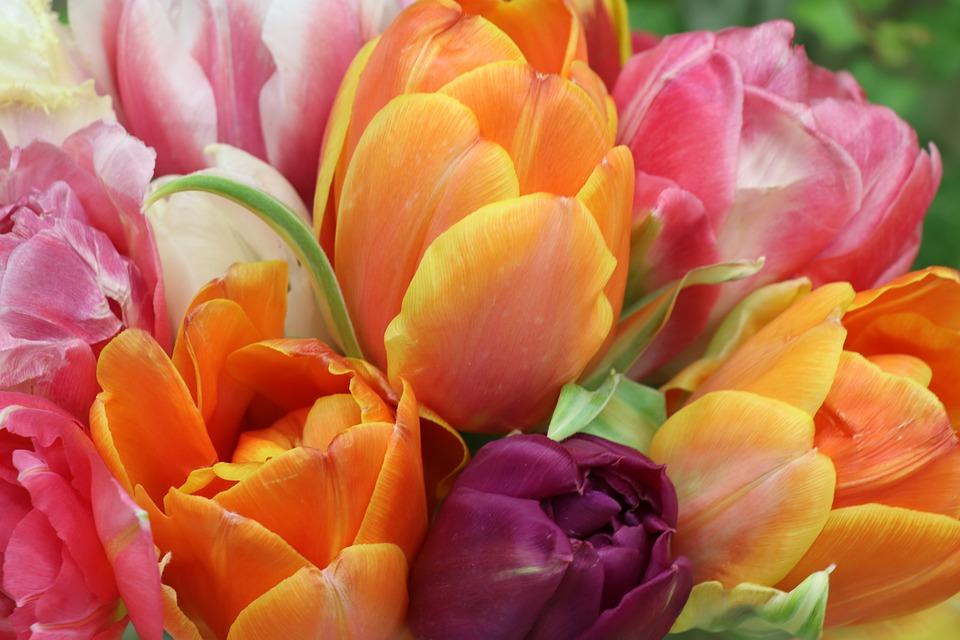 Significado de las flores de colores