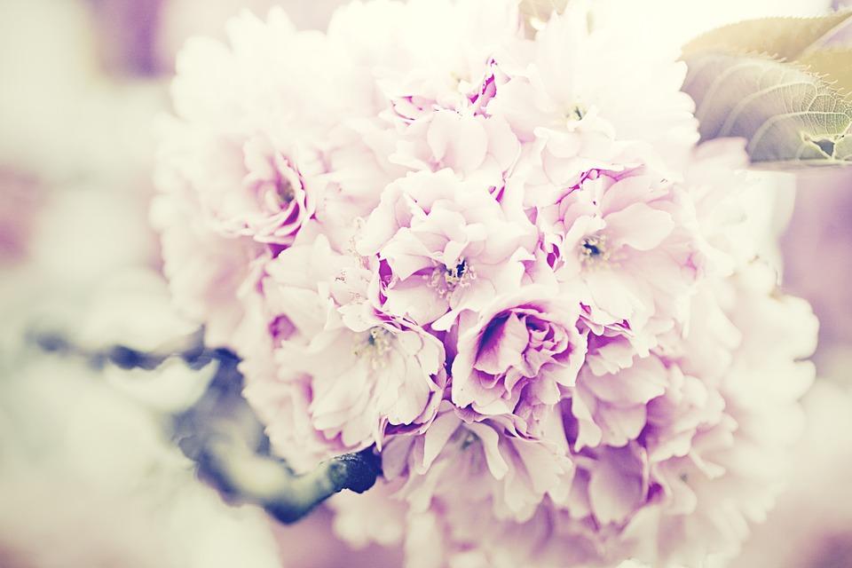 Significado de las flores moradas