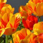 Las 1000 mejores fotos e imágenes de flores de amor y de la naturaleza
